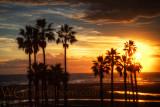 Pico Palms Sunset