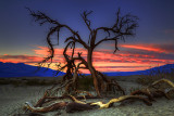 Ghost Tree Death Valley