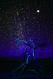 Ghost Tree Starlight Blue