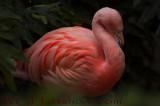 Flamingo Flirt