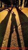 WGH Shadows