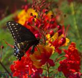 Wildflower Butterfly