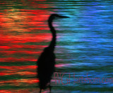 Egret Silhouette Abstraction