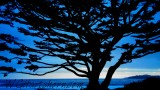 Cypress Silhouette