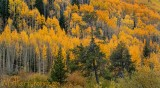 Autumn in Vail Colorado