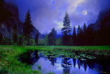 Moonlight Meadow