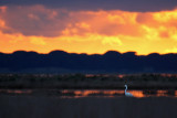 Tramonto sulla Diaccia Botrona - Sunset on Diaccia Botrona