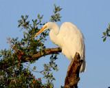 egrets_herons