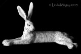 12th June 2013 - hare-y