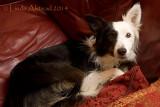 27th February 2014 - scaredy dog