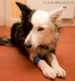 28th March 2014 - Lola, the impatient patient