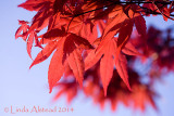 29th April 2014 - acers for the ACES