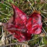 7th September 2014 - it's autumn