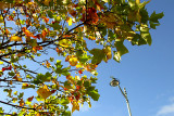 11th October 2014 - autumn comes to Plymouth
