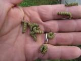 2014 110.jpg Monarch butterfly