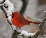 Wintertime Scenes and Backyard Bird Videos
