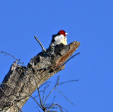Eufaula National Wildlife Refuge - Christmas Bird Count, 12/18/13