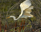 Eufaula National Wildlife Refuge - Birding Event 4/24/14