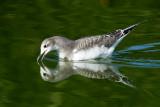 Bay Area Birds - September 2014