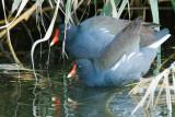 Bay Area Birds - October 2014