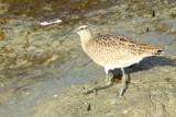 Bay Area Birds - November 2014