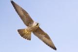Birds at Point Reyes