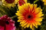12.   At the Philadelphia Flower Show.