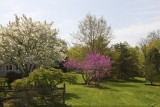 19.  Spring at Medford Leas.