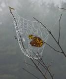 39.  On Ricker Pond, VT.