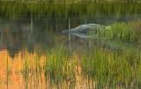 41.  Twilight at Blueberry Pond, VT.