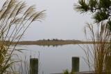 51.  November fog on Liberty Thorofare.