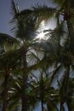 5.  Sun thru Waikiki Beach palm trees.