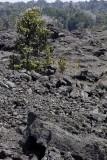 20.  Around the caldera of Halema'uma'u Crater .