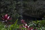 27.  The Fern Grotto, Kauai.