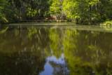 6.  Magnolia Gardens.