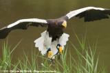 August 11, 2013: Vogelpark Avifauna (NL)