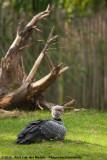October 5, 2013 - Best Zoo (NL)