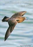 Ornithologisch Jaarverslag Texel 2014