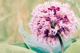 backyard_flowers