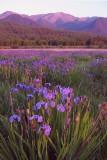 Purple Mountain Majesty #4 Seller