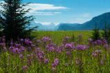 Alaska Landscapes with Flowers