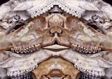 7-Deer-Skull-Konfabulation