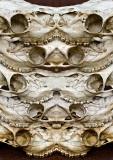 5-Deer-Skulls-Konfabulation