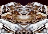 6a-Deer-Skull-Konfabulation