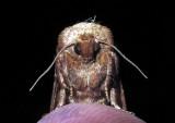Moth-2014-6