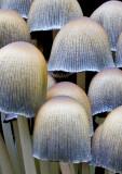 Fungi-Cluster-2011