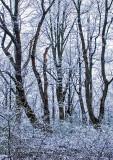 Late-Season-Snow---3 (See p.4 - Foggy Appalachian Trail)