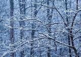 Late-Season-Snow---1