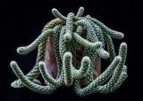Tarantula-Cactus