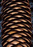 Pine-Cone-Detail